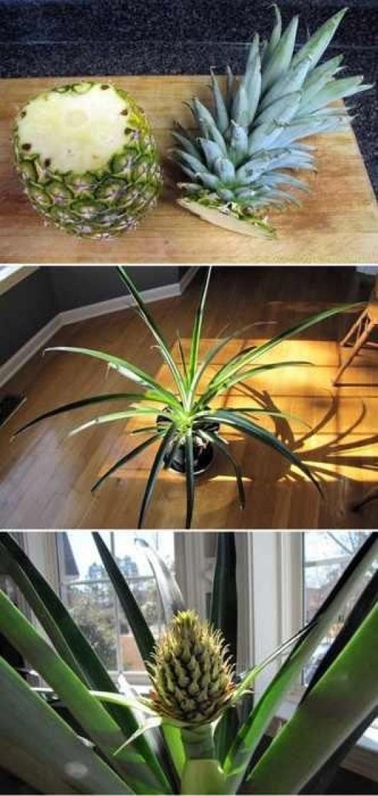 Ιδέες Εσωτερικής διακόσμησης με φυτά19
