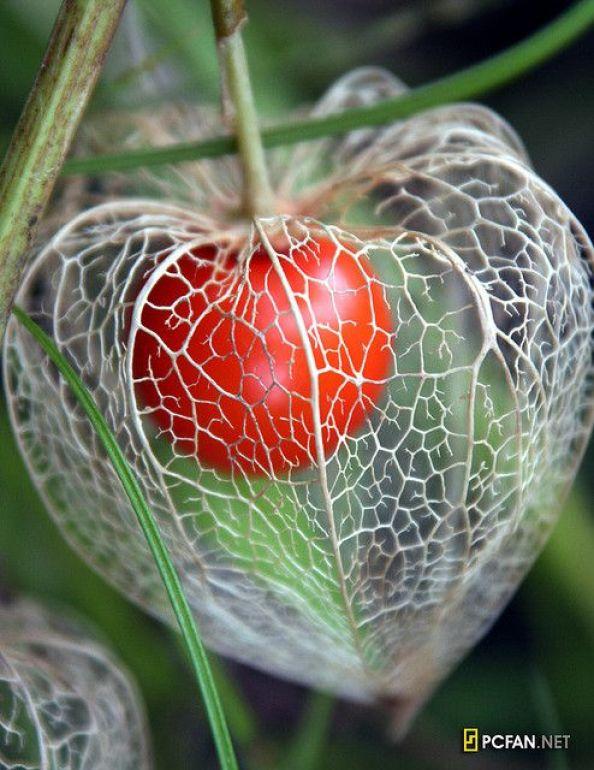 Ιδέες Εσωτερικής διακόσμησης με φυτά2