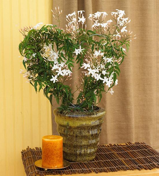 Ιδέες Εσωτερικής διακόσμησης με φυτά21