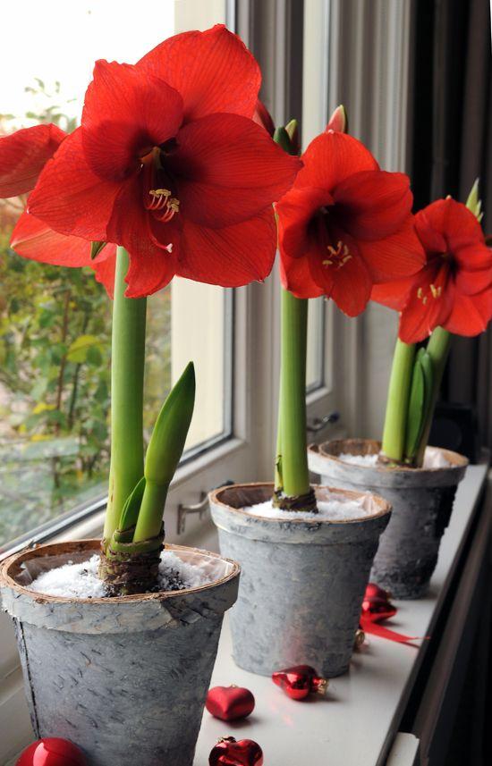 Ιδέες Εσωτερικής διακόσμησης με φυτά22