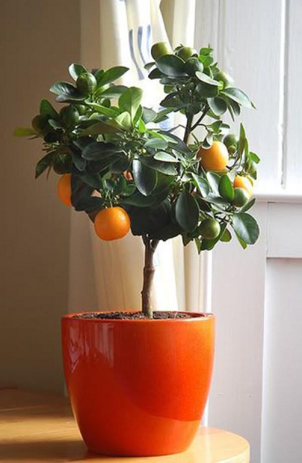 Ιδέες Εσωτερικής διακόσμησης με φυτά24