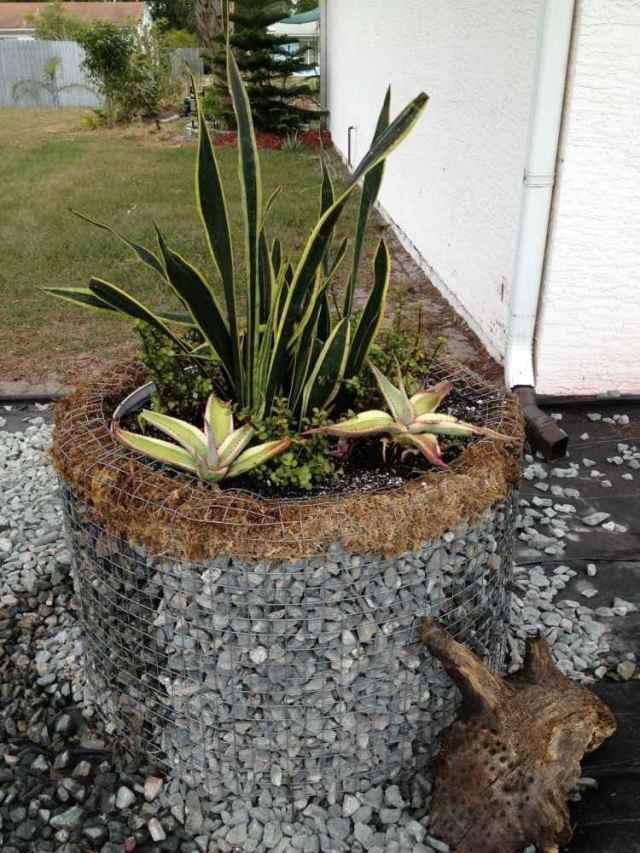 υπερυψωμένος κήπος από συρματοκιβώτια3