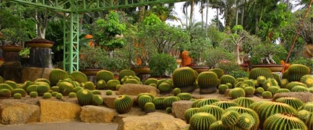 Κήποι με κάκτους31