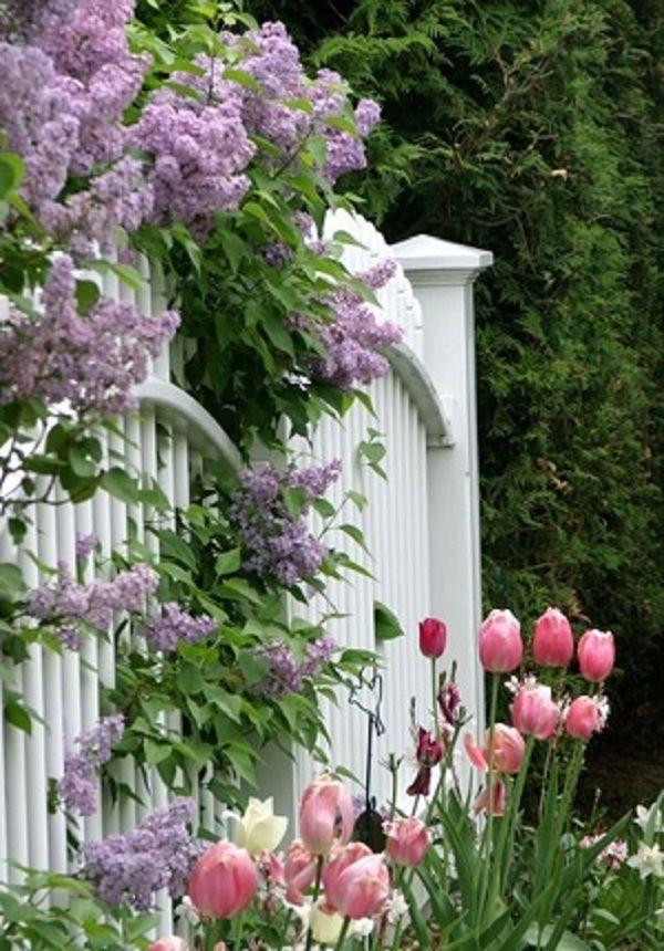 Άνοιξη, η τέλεια εποχή για να φυτέψετε λουλούδια5