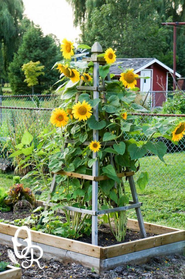ιδέες χωριάτικης διακόσμησης κήπου15