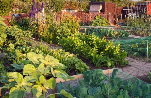 Ιδέες με Φανταστικούς λαχανόκηπους19