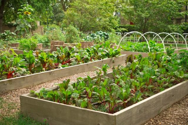 Ιδέες με Φανταστικούς λαχανόκηπους5