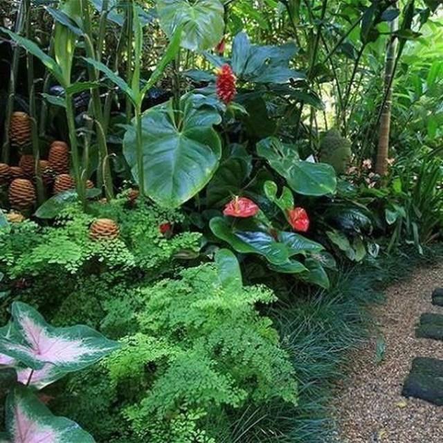 Tropical Home Garden Design Ideas: 44 καλύτερες ιδέες σχεδιασμού κήπου με αποχρώσεις της