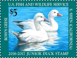 Federal Junior Duck Stamp Exhibit