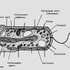 Bacteria Structure Diagram Wall Socket Wiring And Function Of Bacterial Cells Plasma Membrane A Cytoplasmic Region That Contains The Cell Chromosome Dna Ribosomes Various Sorts Inclusions Figure 1