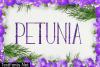 Petunia Font