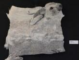 Sneeuwhaas in Zeist