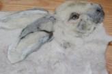 detail Sneeuwhaas