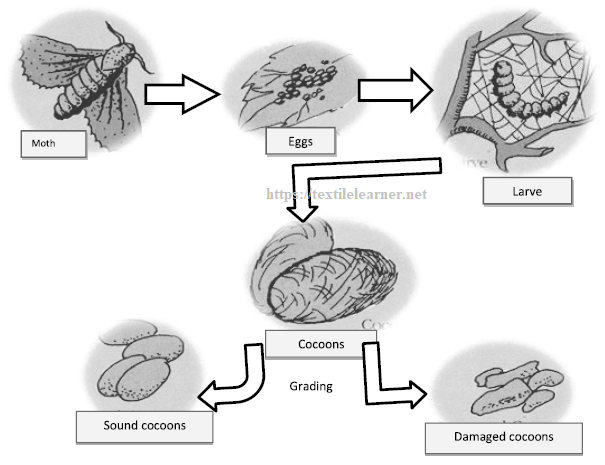 Manufacturing process flow of silk