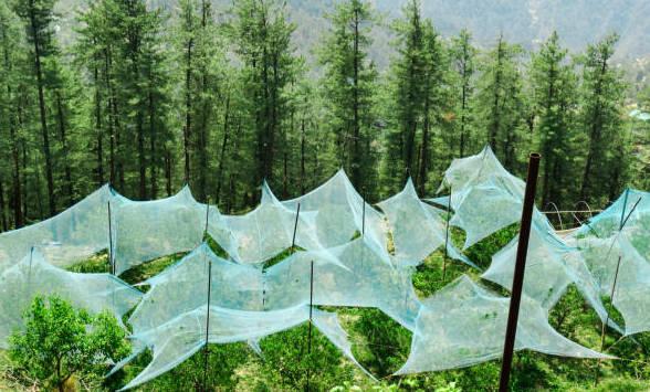 Anti-hailstone nets
