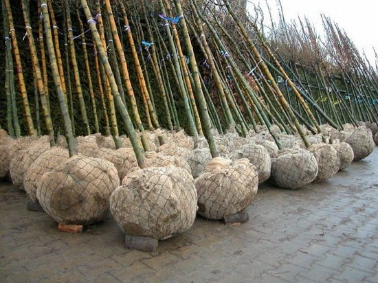 Root ball net