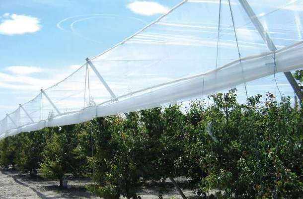 Wind protection nets