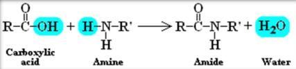 amide molecule