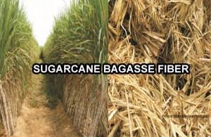 sugarcane bagasse fiber