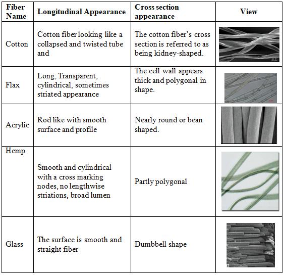 Cross section of fibers