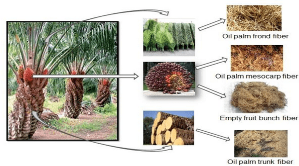 Sources of Date Palm Fiber