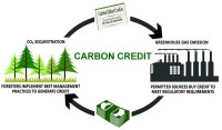Carbon Credit: Definition, Types and How Does It Works