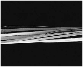 Scanning electron micrograph showing fibrillated tape yarn