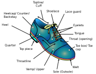 Anatomy or Components of a Shoe