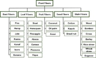 Classification of vegetables fibers