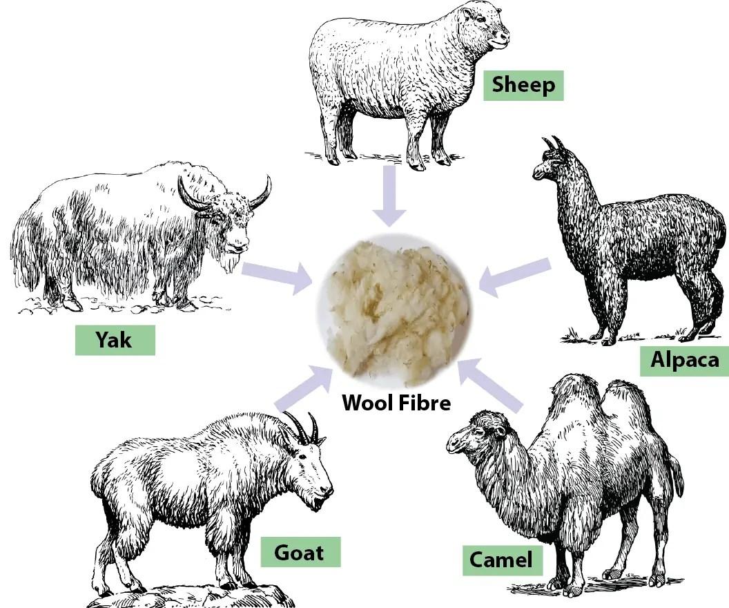 Sheep Production Worksheet