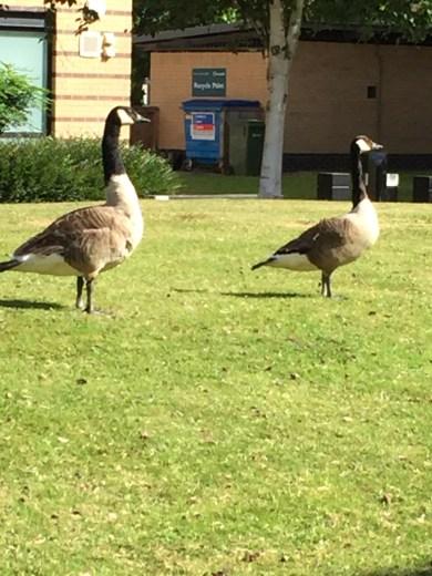 Some of the campus birdlife