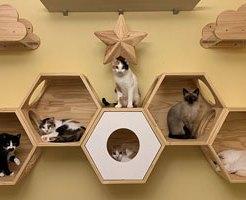 猫専用のお部屋が登場!たくさんの猫と過ごせる新しい民泊が話題に!