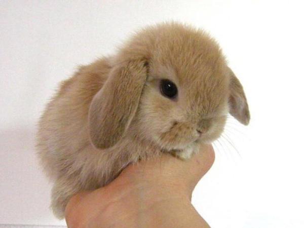 Чем питаются кролики? Декоративные кролики: уход и содержание. Корм для кроликов