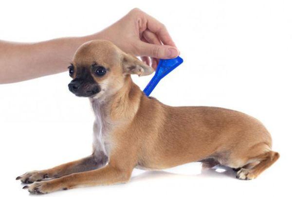 Что собакам дают от аллергии? Лечение и профилактика