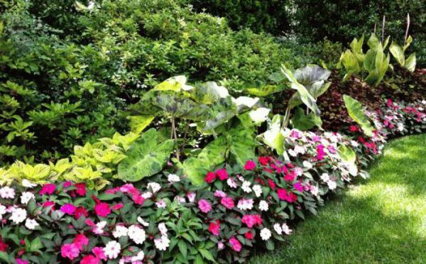 Цветы-однолетки: названия, посадка, выращивание