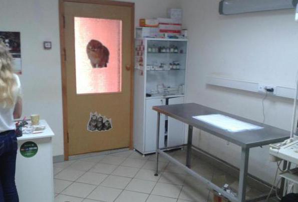Лучшие ветеринарные клиники в Ногинске