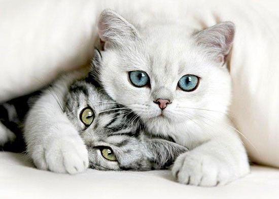 Обзор лечебных кормов для кошек при заболевании ЖКТ
