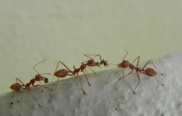 Гель от муравьев «Великий воин» - эффективное средство
