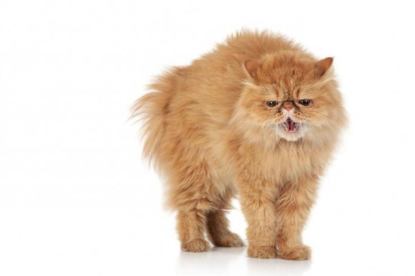 Котенок не ест сухой корм: что делать и каковы возможные причины