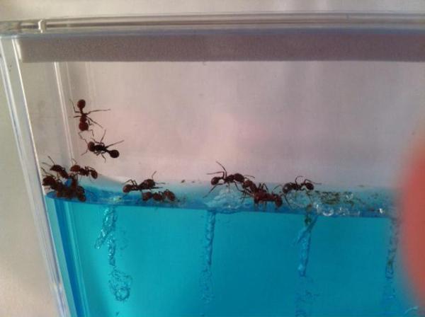 Гелевый муравейник: виды и достоинства