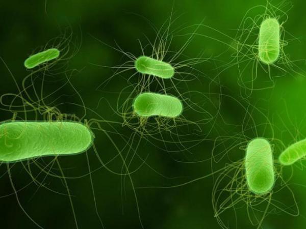 Условно патогенные энтеробактерии - что это такое? Заболевания, вызываемые энтеробактериями