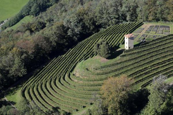 Виноград Солярис: описание сорта, фото, отзывы