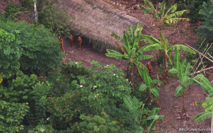 Бразильские золотодобытчики убили нескольких членов неконтактного племени в Амазонии