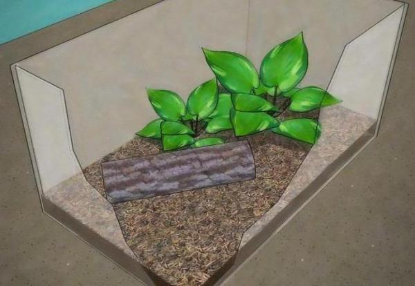 Содержание богомола в домашних условиях: советы и рекомендации, фото