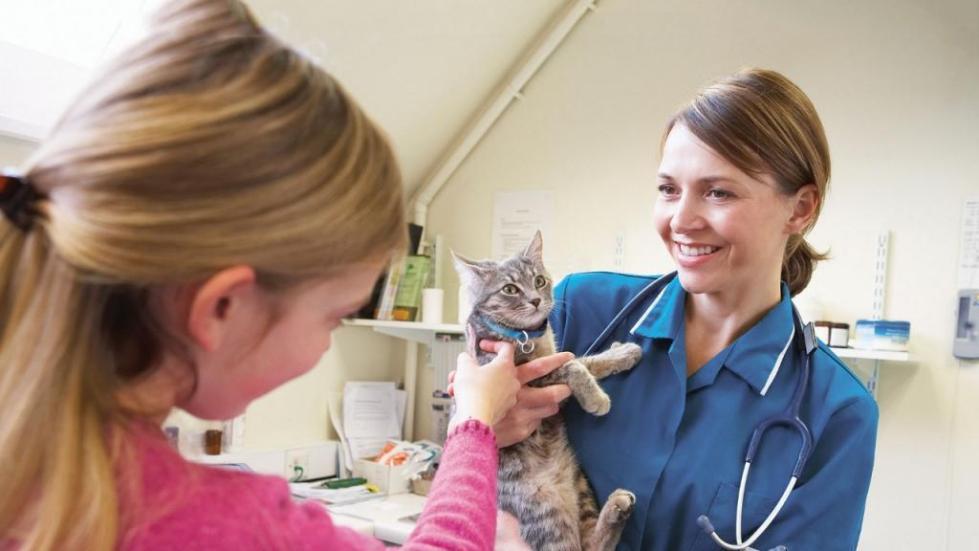 отзывы хозяев кошек и врачей