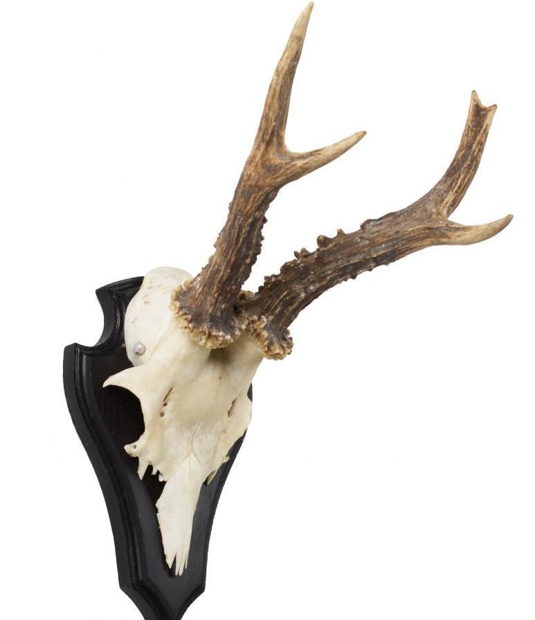 Охотничий трофей