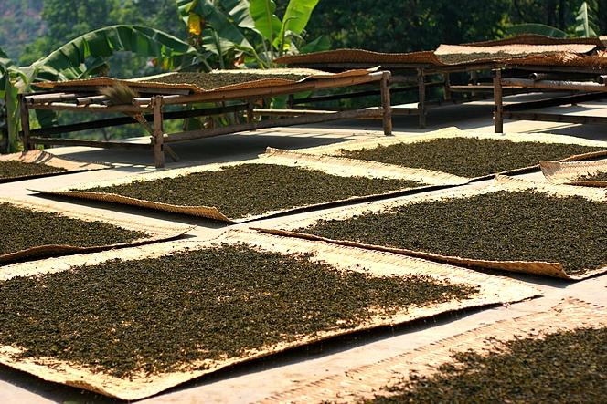 Производство чая Пуэр
