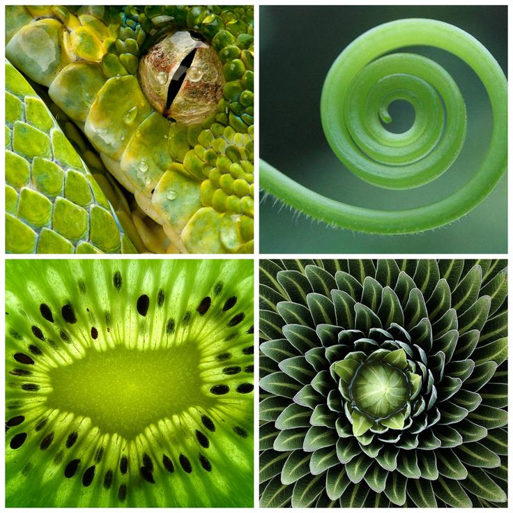 многообразие форм окружающего мира