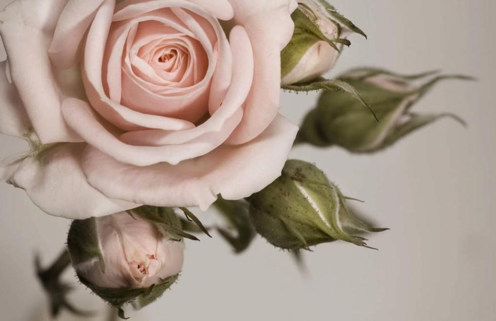 Изящные цветы