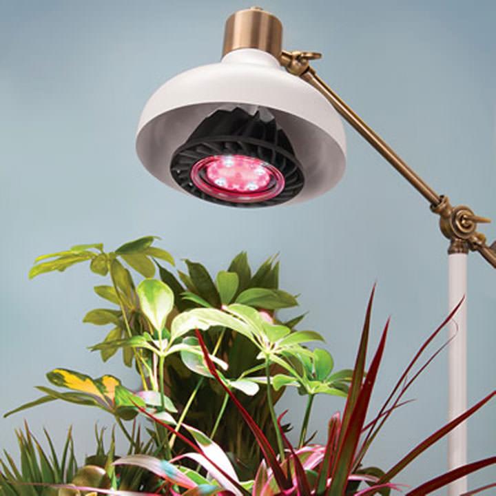 лампы для подсветки домашних растений